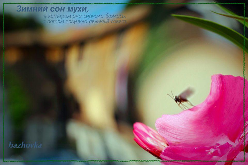 Зимний сон мухи, в котором она встретилась со старинной подругой и получила от неё совет